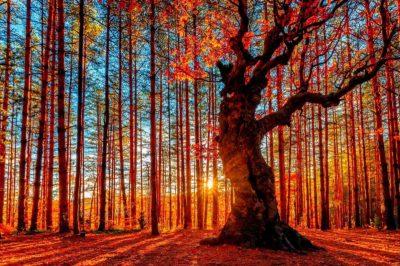 Lucid Living - Living in Enchantment